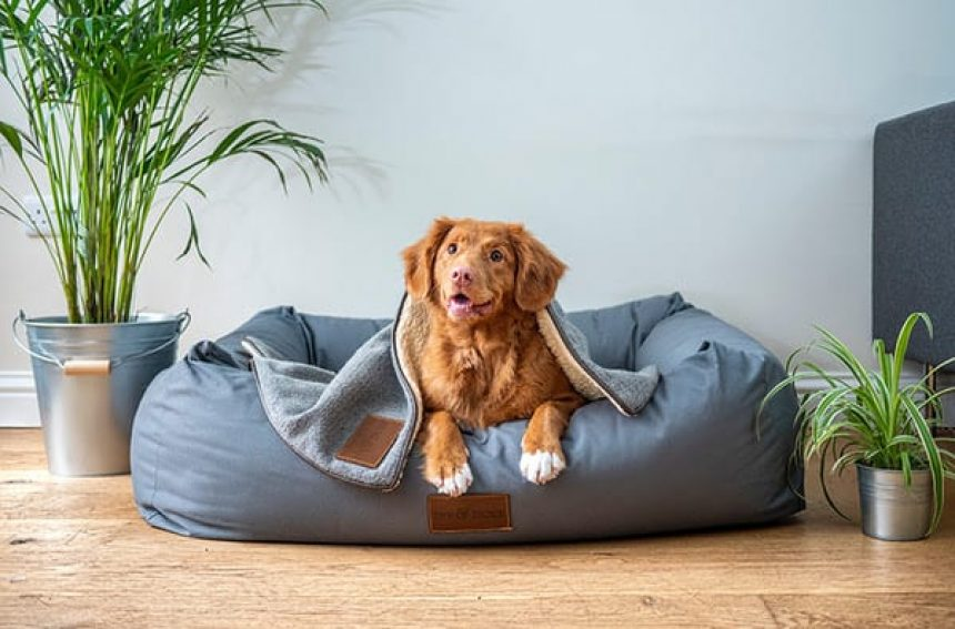 3 INDOOR GAMES TO PLAY WITH YOUR PUP