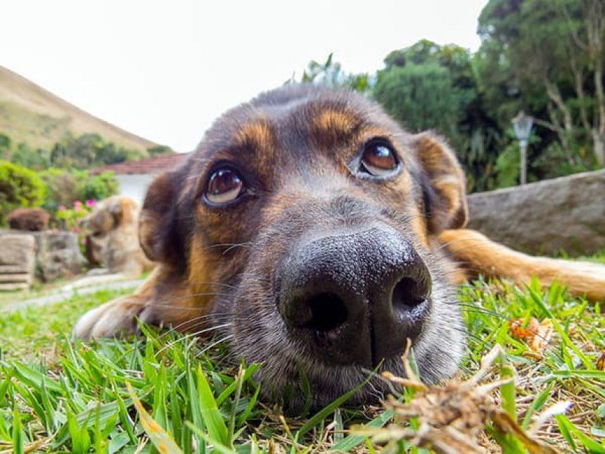 CREATING A DOG-FRIENDLY BACKYARD